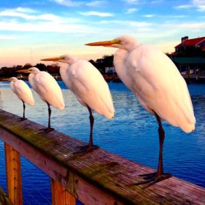 Birdssss